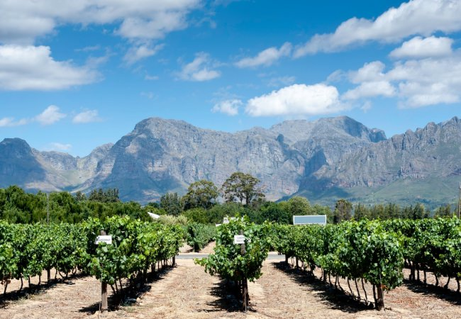 Best Vineyards in Mallorca